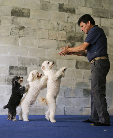 In this photo taken on Tuesday, April 22, 2014, Richard Olate works on a routine with performing dogs, from left, Loca, Copo and Toby, during a training session in Sorrento, Fla. Since the father  ...
