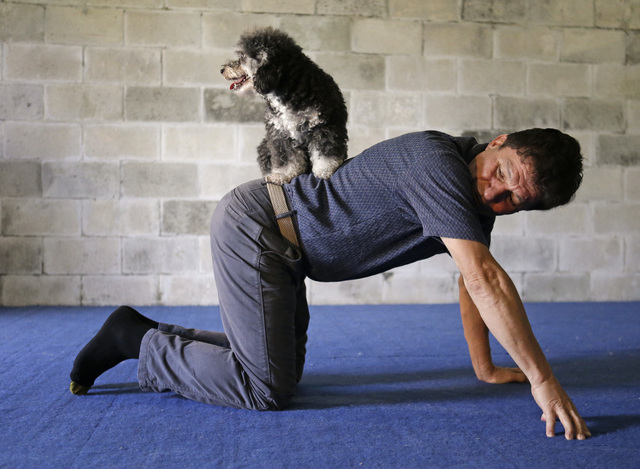 *HOLD FOR STORY BY SUE MANNING* In this Tuesday, April 22, 2014 photo Richard Olate works on a trick with one of his performing dogs Loca in Sorrento, Fla. The Olates spend more than 11 months a y ...