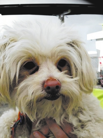 Duncan The Animal Foundation I'm Duncan (I.D. No. A770323), a 5-year-old neutered male Maltese who wants to share my love with you. I'm a total sweetheart with kind eyes, and I want to make lo ...
