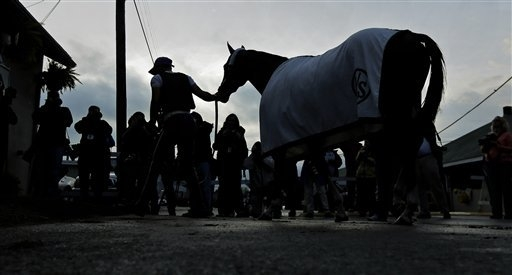 Kentucky Derby hopeful California Chrome heads to the barn after getting a bath after a morning workout at Churchill Downs Wednesday, April 30, 2014, in Louisville, Ky. (AP Photo/Charlie Riedel)