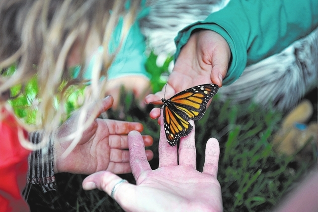 """A monarch butterfly is shared among young visitors to the Nathan Adelson Hospice's """"Celebration of Life"""" butterfly release at UNLV on Sunday, April 27, 2014. The annual event allows participants w ..."""
