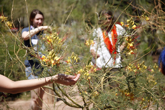 People touch a plant during the Ecosex walking tour through UNLV in Las Vegas Wednesday, April 23, 2014. (John Locher/Las Vegas Review-Journal)