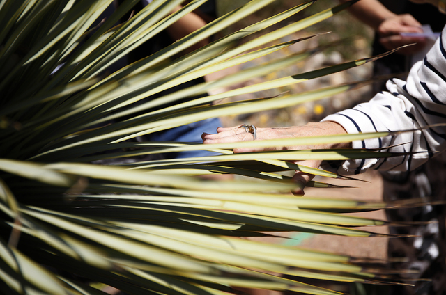 Beth Stephens touches a plant while leading the Ecosex walking tour through UNLV in Las Vegas Wednesday, April 23, 2014. (John Locher/Las Vegas Review-Journal)