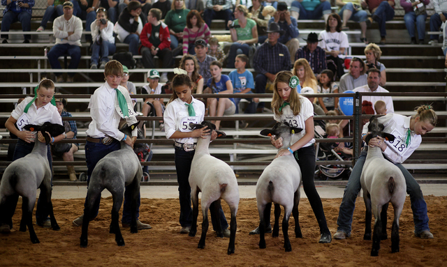 From left, Jamie Leavitt, Conner Wilson, Hope Whipple, Shelbi Walker (cq) and Ashlee Williams hold their lambs while competing in the Jr Market Lamb Show at the Clark County Fair & Rodeo in Logand ...