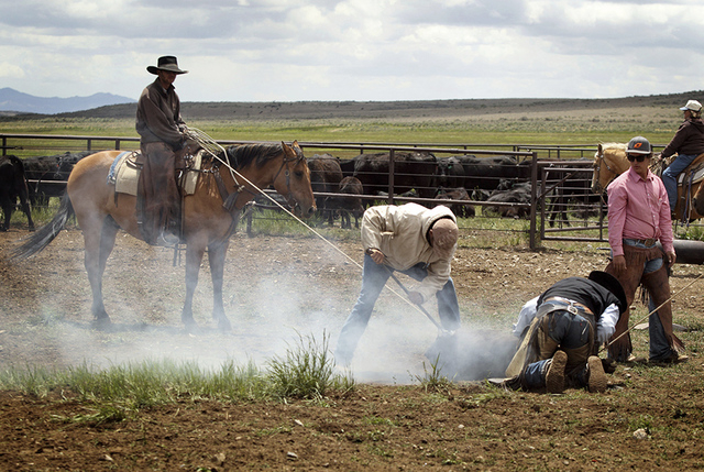 Cowboys work at branding cattle in June 2013 at a ranch north of Elko that actor Bing Crosby owned in the 1940s and '50s. (Jeff Scheid/Las Vegas Review-Journal)