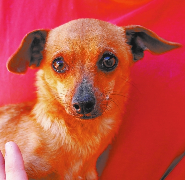 Maurice Nevada SPCA I'm a tiny boy who just wants to be loved and appreciated.  Having nearly perished from starvation, I know that each peaceful day is precious and beautiful. My name is Mauric ...