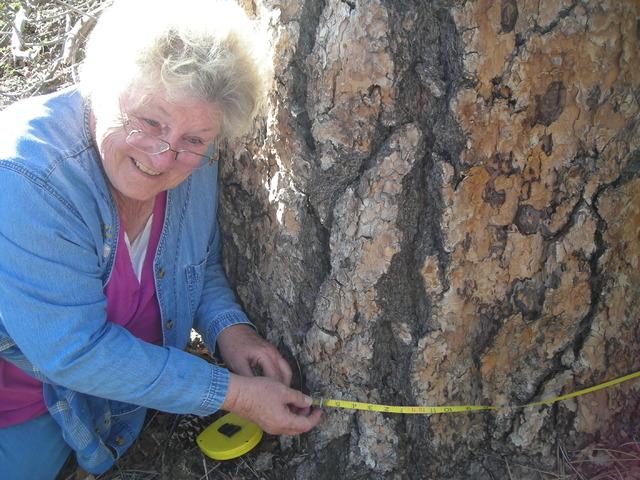Life-long outdoor advocate Terri Robertson poses with a Ponderosa pine tree her family likes to visit on Mount Potosi, southwest of Las Vegas. (Courtesy Terri Robertson)