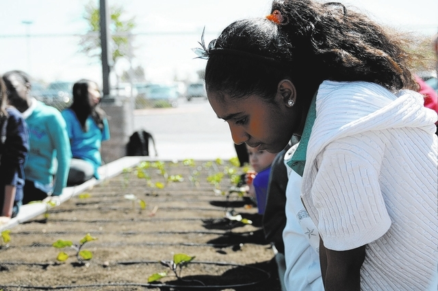 Kisanet Zeray, 11, a fifth-grader at Thiriot Elementary School, takes part in a gardening class April 3 at the school's Dream Garden. (Erik Verduzco/View)