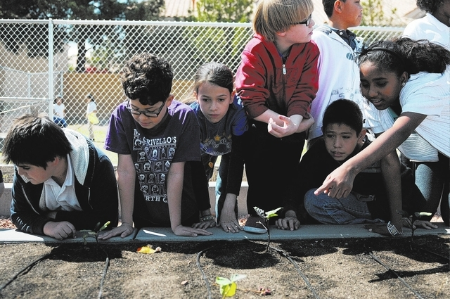 Fifth-graders at Thiriot Elementary School, 5700 W. Harmon Ave., participate in a gardening class April 3 at their school's Dream Garden. (Erik Verduzco/View)