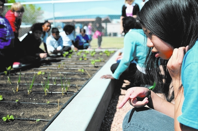 Ericka Garces, 11, a fifth-grader at Thiriot Elementary School, participates in a gardening class April 3. (Erik Verduzco/View)