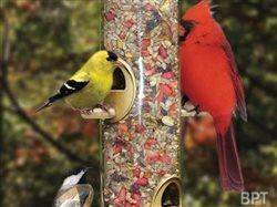 Bird feeding faux pas? 5 easy, no-fret fixes