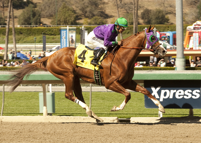 California Chrome, ridden by Victor Espinoza, leads wire-to-wire to win the San Felipe Stakes on March 8 at Santa Anita Park in Arcadia, Calif. California Chrome is the 5-2 favorite in today's K ...