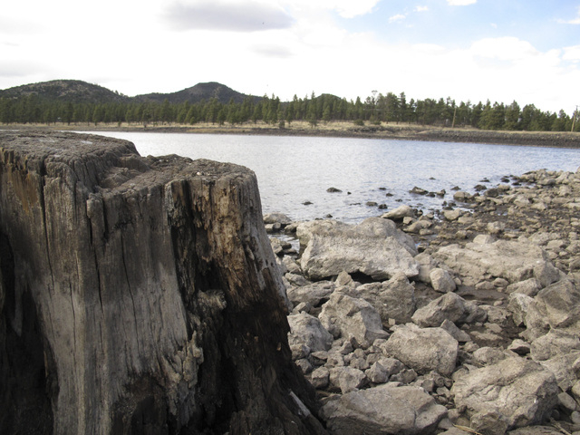 Low reservoir levels reveal tree stumps and a cracked lake bed in Williams, Ariz. Officials in Williams have declared a water crisis amid a drought that is quickly drying up nearby reservoirs and  ...