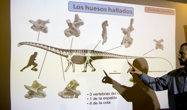 "Paleontologist Pablo Gallina speaks to the press about a newly discovered dinosaur discovered in Argentina as he points to an illustration that reads in Spanish ""Bones recovered"" in Buen ..."