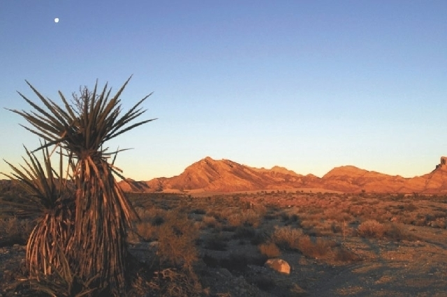 A woman fell to her death in the Calico Basin around the Red Springs picnic area of the Red Rock Canyon National Conservation Area Friday night. (Review-Journal File Photo)