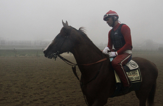 Preakness Stakes favorite California Chrome, winner of the Kentucky Derby, heads to the track for a morning workout in the fog with exercise rider Willie Delgado aboard at Pimlico Race Course in B ...