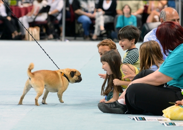 """More than 50 dogs were adopted after show boating Sunday in the Animal Foundation's """"Best in Show"""" on Sunday. (Courtesy photo by Bryan Steffy/Getty-WireImage)"""