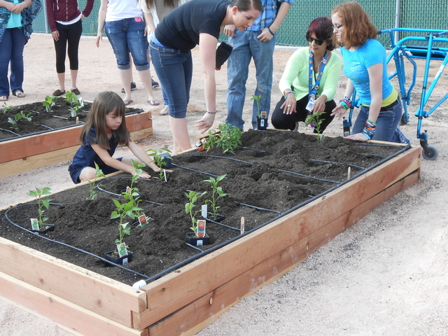 Parents, teachers and students begin planting various vegetables April 22 at the newly unveiled garden at Coronado High School. (Michael Lyle/ Las Vegas Review-Journal)