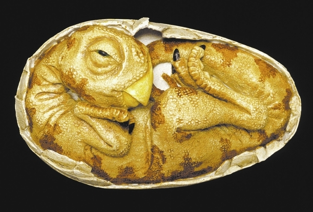 This life-sized model shows the embryo of an oviraptor dinosaur as it may have looked shortly before hatching.  Oviraptors were light, fast-moving carnivores with long claws and toothless beaks.   ...
