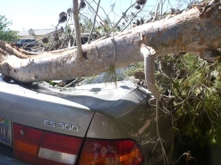 Review-Journal reader Lauriann submitted this photo of a large tree branch that fell on her son's car as a result of high winds in the valley.