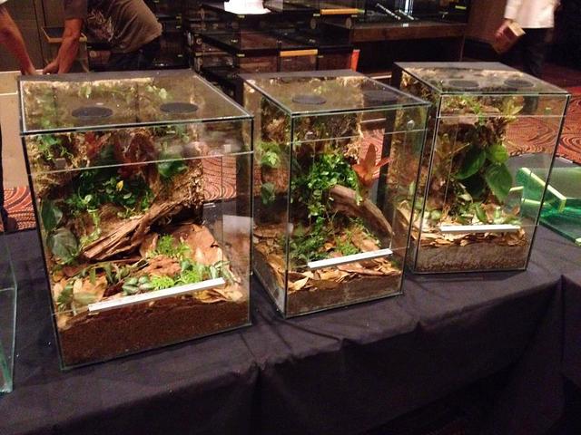 Reptile expo set to acquaint public with exotic pets | Las Vegas