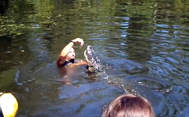 This screen grab from video released by Stacy Hicks shows an unidentified tour guide for Airboat Adventures swimming with and feeding alligators. (AP/Stacy Hicks)