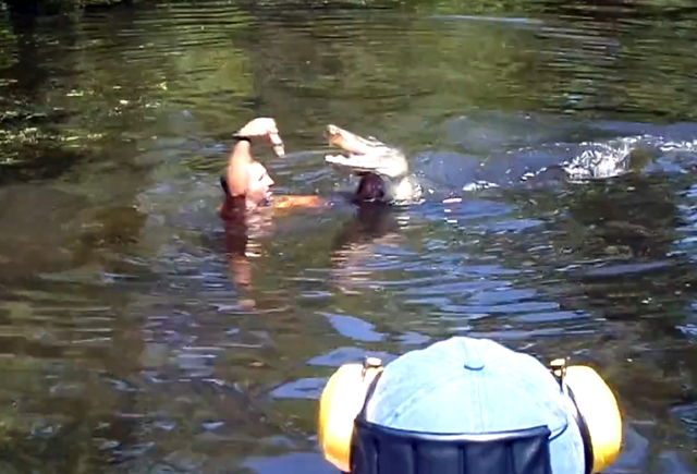 This screen grab from video released by Stacy Hicks shows an unidentified tour guide for Airboat Adventures swimming with and feeding alligators, at one point feeding a marshmallow to a gator with ...