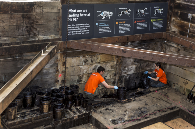 Excavators work at the bottom of the reactivated Pit 91 at the Page Museum La Brea Tar Pits in Los Angeles Thursday, June 19, 2014. The public will once again get an up-close view of scientists un ...