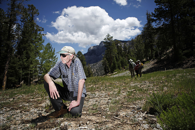 Butterfly expert Bruce Boyd rests on a run at the Las Vegas Ski and Snowboard Resort on Mount Charleston outside of Las Vegas July 28, 2011. (JOHN LOCHER/LAS VEGAS REVIEW-JOURNAL)