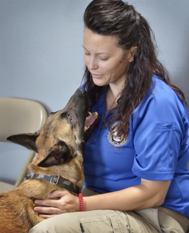 Garzon, a Belgian Malinois trained as an explosives detection dog, relaxes with Elite Tactical Security Solutions owner Maribah Diaz after a training session at the company's offices and training  ...