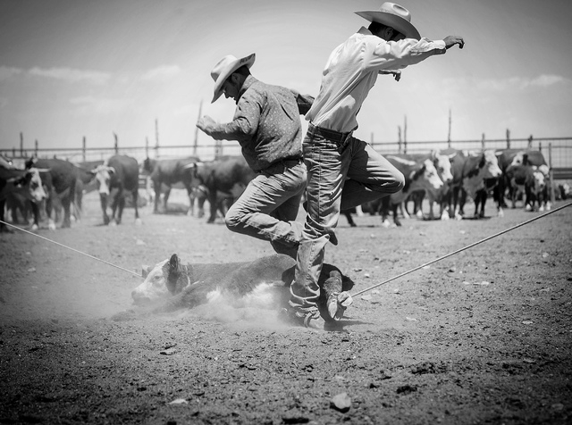 Pook Hoots, left, and Ty Berg jump over a calf during branding at the Twin Creek Ranch, located about d 200 miles north of Las Vegas as seen Wednesday, June 4, 2014. The Fallini family has been op ...