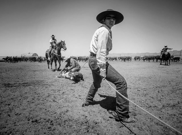 Anna Fallini Berg during calf branding at the family's Twin Creek Ranch, located around 200 miles north of Las Vegas as seen Tuesday, June 3, 2014. The Fallini family has been operating the ranch  ...