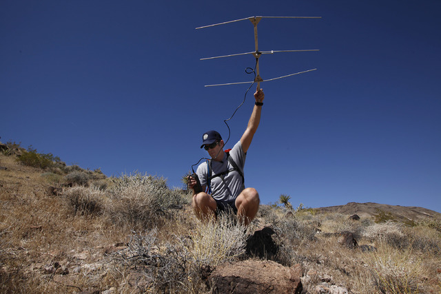 Jason Jones holds a transceiver used to track Banded Gila Monsters in the desert near Las Vegas on Wednesday, June 4, 2014. Jones is a herpetologist for the Nevada Department of Wildlife and has b ...