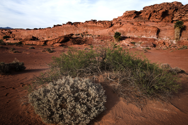 Little Finland, also known as Hobgoblin's Playground and Devil's Fire, as seen Thursday, May 22, 2014. The Gold Butte Region, administered by the BLM and the U.S. National Park Service, is located ...
