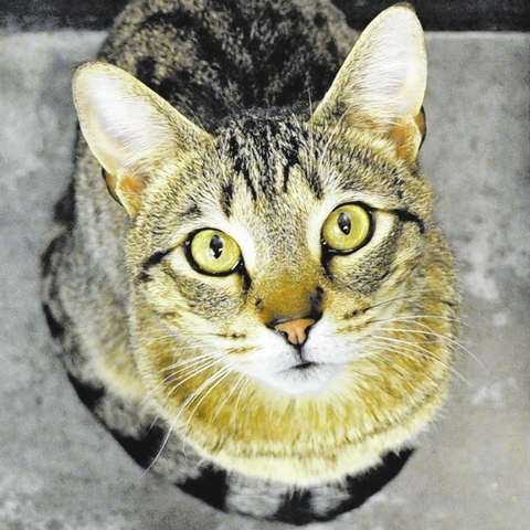 Porter, Happy Home Animal Sanctuary My name is Porter. I am a handsome 1-year-old brown tabby. I'm affectionate, playful and inquisitive. I would make a perfect pet if folks would quit looking a ...