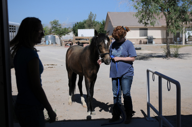 Denise DeLucia interacts with Rocky, a rescued 2-year-old grulla horse at a friend's private ranch in Las Vegas Tuesday, June 24, 2014. Robin Warren, 13, with the help of her caregiver Denise DeLu ...