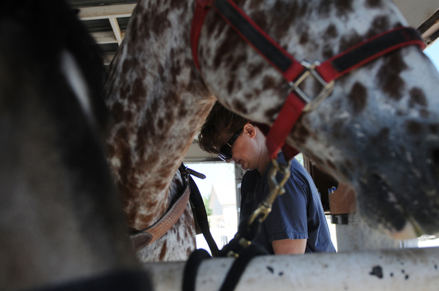 Denise DeLucia mounts a saddle on Chief, a 20-year-old appaloosa horse at a private ranch in Las Vegas Tuesday, June 24, 2014. Robin Warren, 13, with the help of her caregiver Denise DeLucia as a  ...