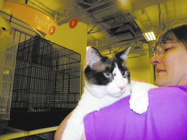 Casey, Paws 4 Love Casey is a 5-year-old female snowshoe mix. This exquisite-looking girl was dumped by her owners. Casey likes to follow you around like a dog and will sleep on her back with her  ...