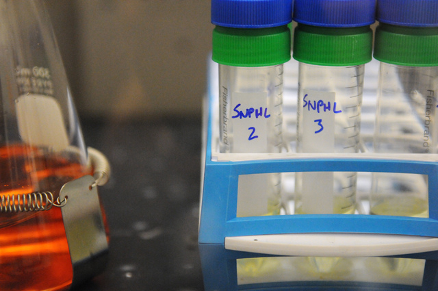 Test tubes are seen at Southern Nevada Public Health Laboratory in Las Vegas during the facility's first media tour after 10 years of operation Wednesday, June 11, 2014. (Erik Verduzco/Las Vegas R ...