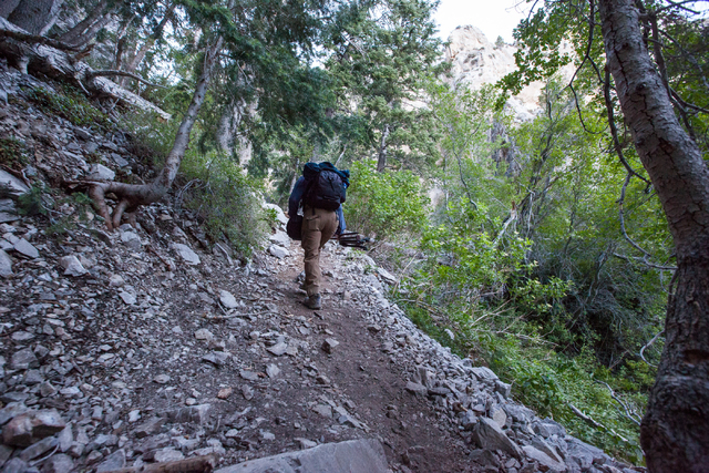 Fred Bell carries his sound recording equipment while hiking up Fletcher Canyon at Mount Charleston on Thursday, June 19, 2014. Bell goes to various areas to record the sounds of nature, usually f ...