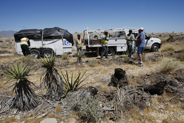 A crew from Gothic Landscaping, contracted by the BLM, removes dead and dying Yucca cacti near a flood detention basin west of the intersection of highway 215 and Ann road in the Las Vegas valley  ...