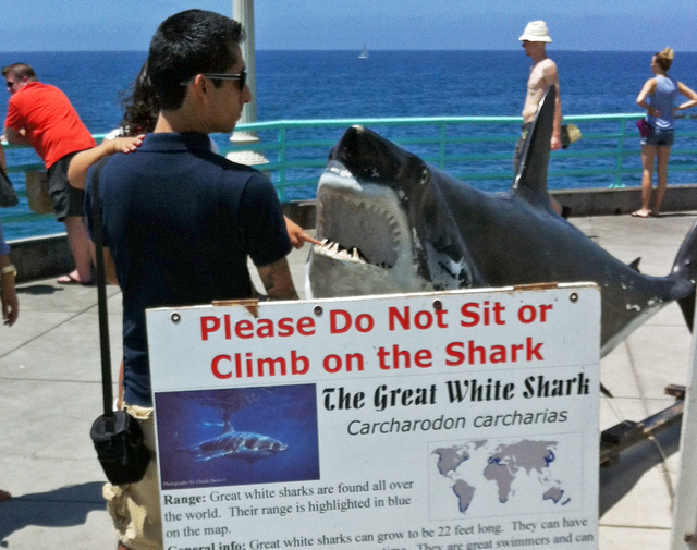 A man and child view a display of a great white shark on the Manhattan Beach, Calif.,  Pier Sunday, July 6, 2014, one day after a swimmer was bitten by a great white shark off the Southern Califor ...