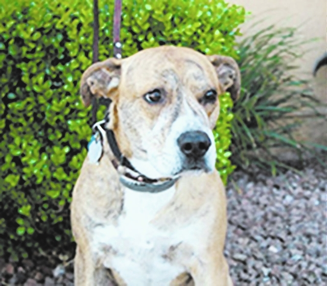 Rufus Roy, Animal Network Rufus Roy is a 5-year-old sweet boy looking for a forever home. Rufus knows all his basic commands, has great manners and is house-trained. Rufus would love an all-adult  ...