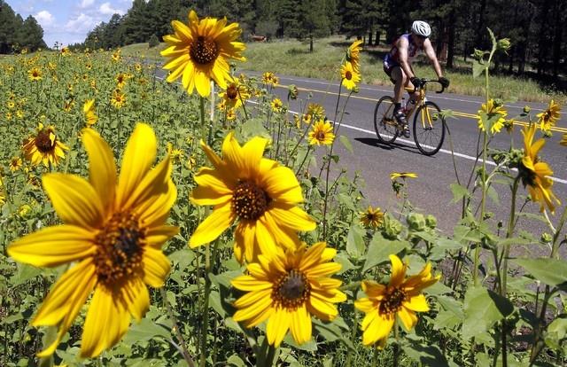 A cyclist travels past wildflowers near Flagstaff, Ariz. (AP File Photo/Ross D. Franklin)