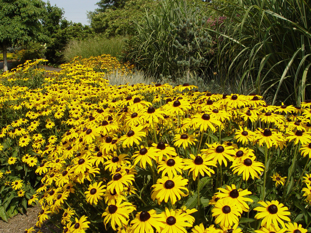Maureen Gilmer/McClatchy-Tribune News Service Experts agree that larger swaths of the same plant are far more appealing to bees.