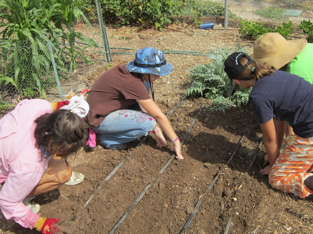 Courtesy Photo Junior Master Gardener participants Mary Sloan, Sophia Bergeron and Dailynn Burgess plant garlic at the Lifelong Learning Center along with Karyn Johnson, junior master coordinator.