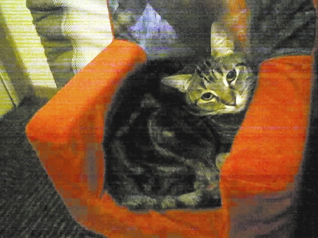 """Christina from Spring Valley said, """"This is Taco the cat. She has been my source of eternal joy for 13 years now. We just found out she has cancer of the mouth and won't be with us for much lo ..."""