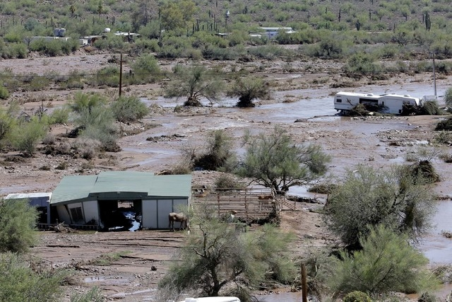 A horse waits to be evacuated in an area where  flash flood waters overran Skunk Creek, Tuesday, Aug. 19, 2014, in New River, Ariz., just northwest of Phoenix. (AP Photo/Matt York)