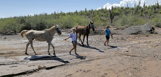 Neighbors evacuate horses from an area effected by flash flood waters that overran Skunk Creek, Tuesday, Aug. 19, 2014, in New River, Ariz., just northwest of Phoenix. (AP Photo/Matt York)