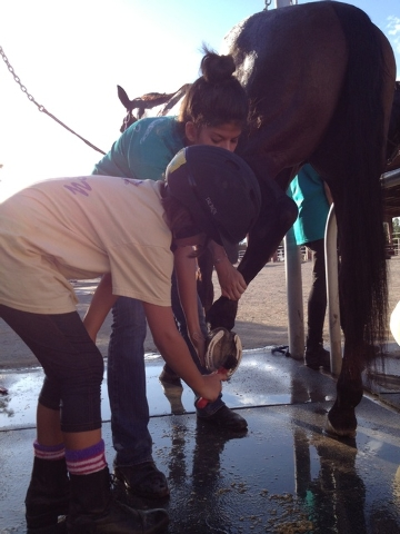 Children clean a horse's foot while participating in programs at White Horse Youth Ranch, a nonprofit that inspires and educates socially challenged children using horses. (Special to View)
